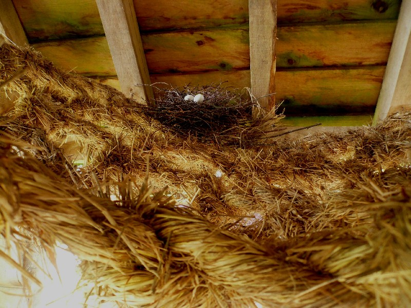 Nests in Nets