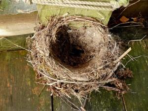 thrush nest