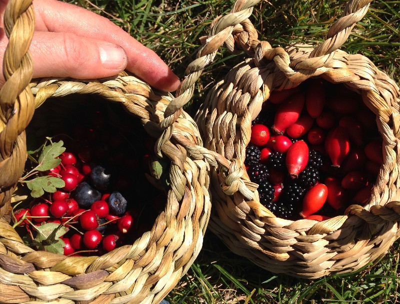 foraging baskets course sussex