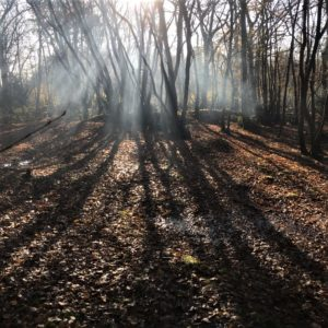 Mindfulness Rewilding course Sussex Woods