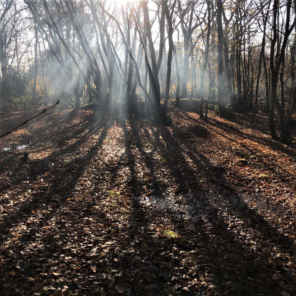 Mindfulness Rewilding course Sussex Woods