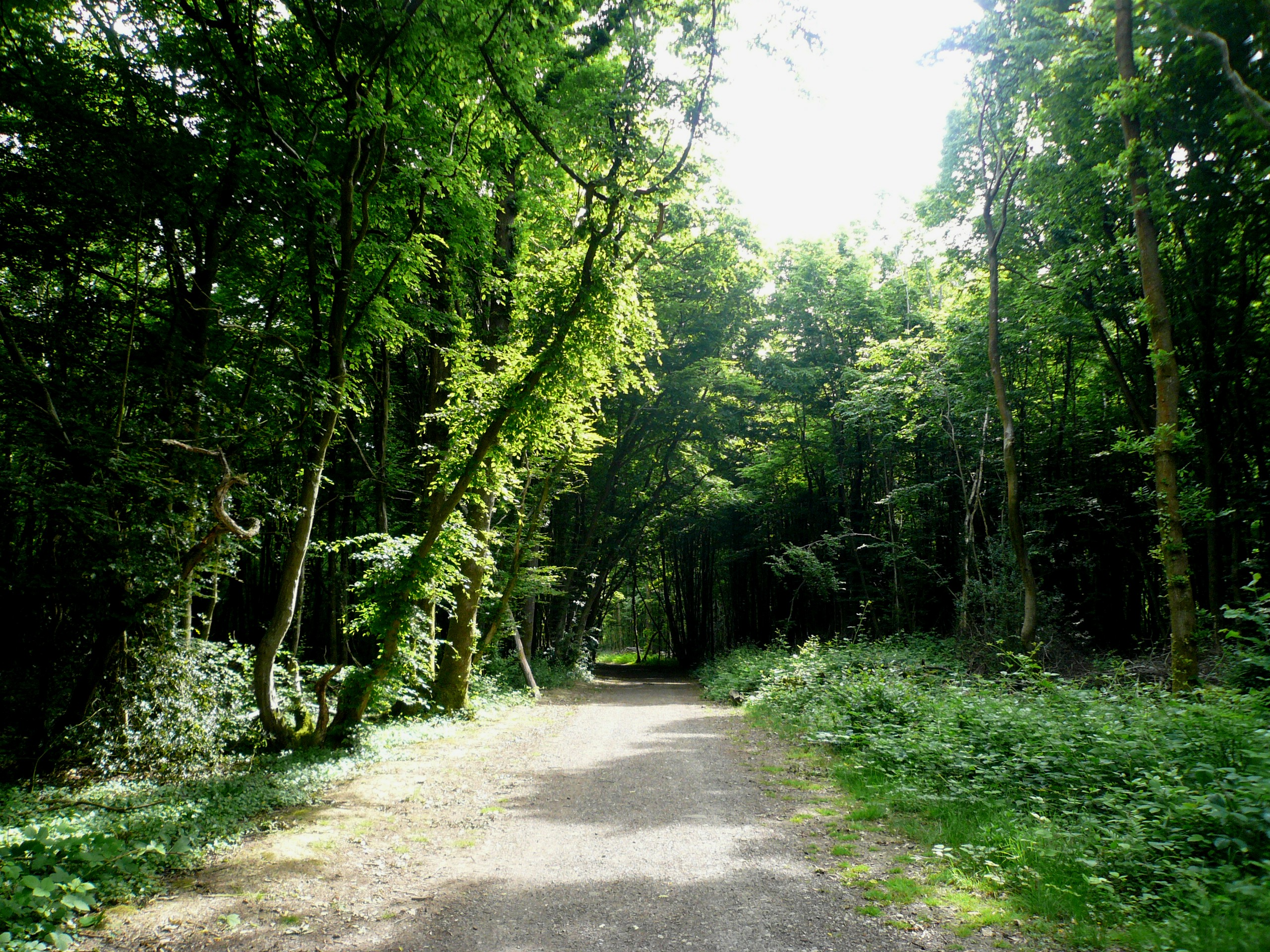 mindfulness in nature course sussex